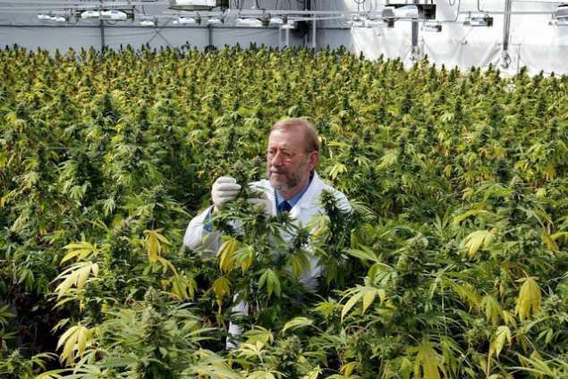"Is cannabis/hemp a ""dietary supplement"" and/or a ""medicine""? | cannabias"